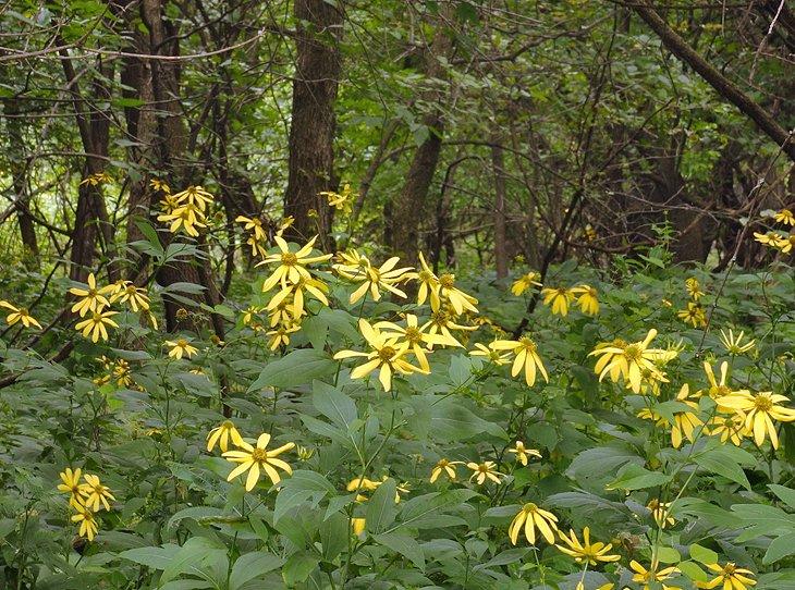 Flores a lo largo de un sendero en Fort Snelling State Park