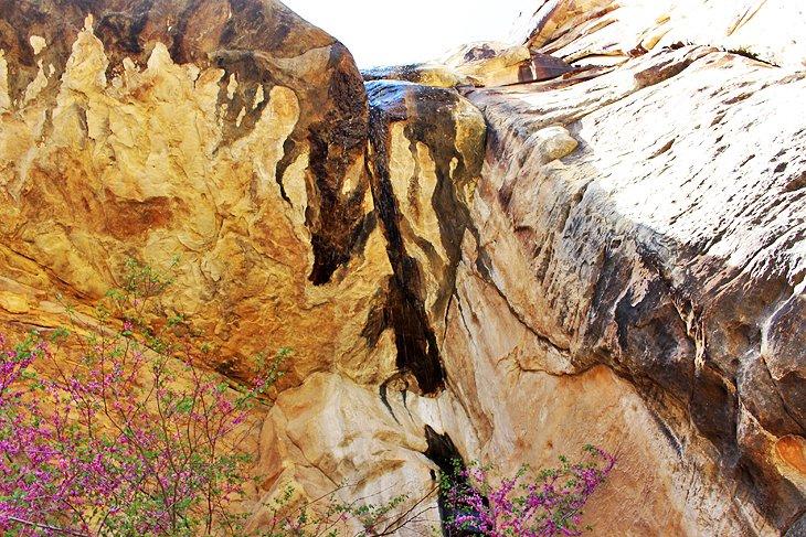 Lost Canyon - Sendero de descubrimiento para niños
