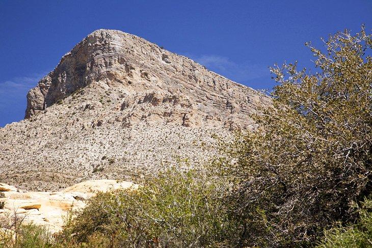 Sendero del pico Turtlehead