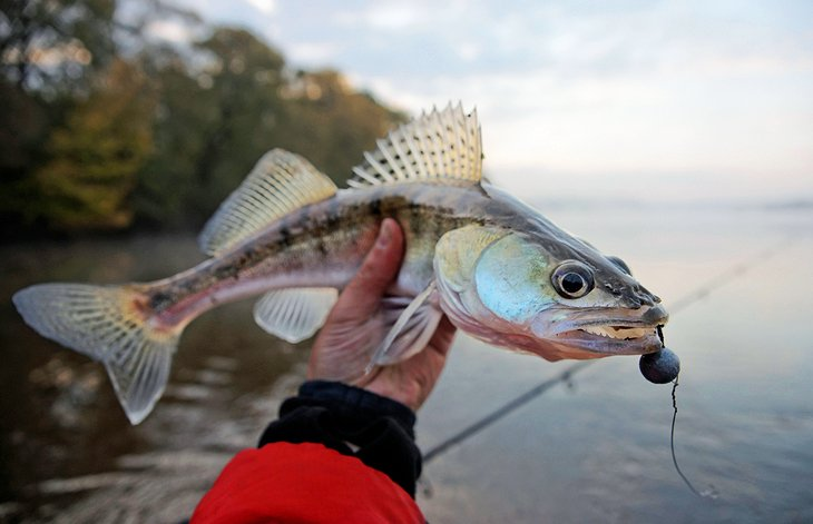 12 best fishing lakes in ohio planetware for Lake erie fish