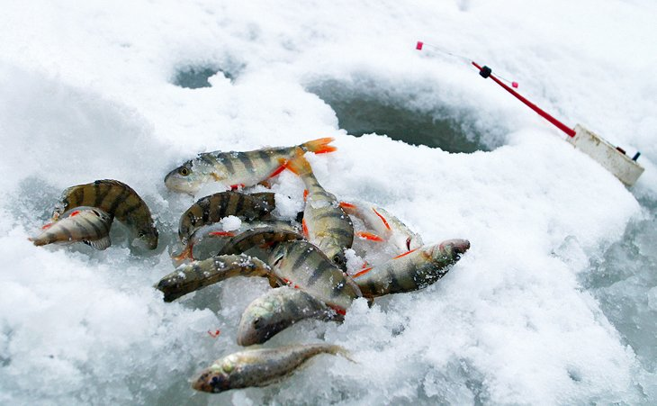 Perch on the ice