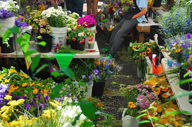 Flowers on display at the Saturday Market