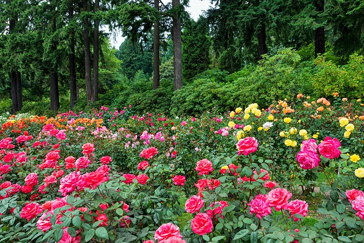 12 top rated tourist attractions in portland oregon planetware for The gardens of the american rose center