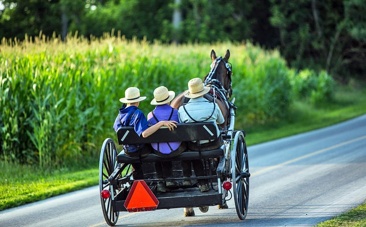 Amish Cart in Dutch Country
