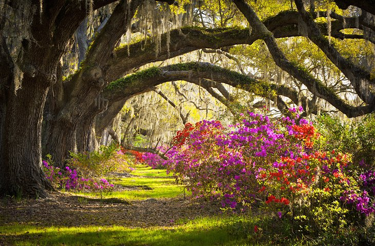 11 Top Rated Tourist Attractions In South Carolina Planetware