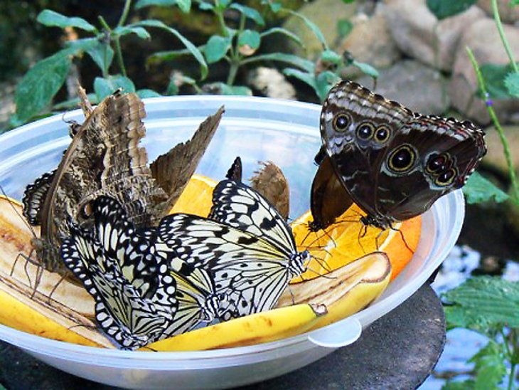Sertoma Butterfly House and Marine Cove