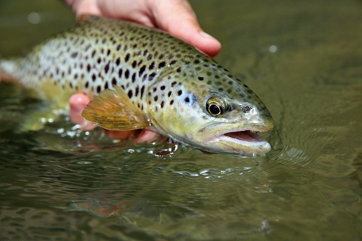 12 top rated fly fishing destinations in tennessee for Trout fishing in tennessee