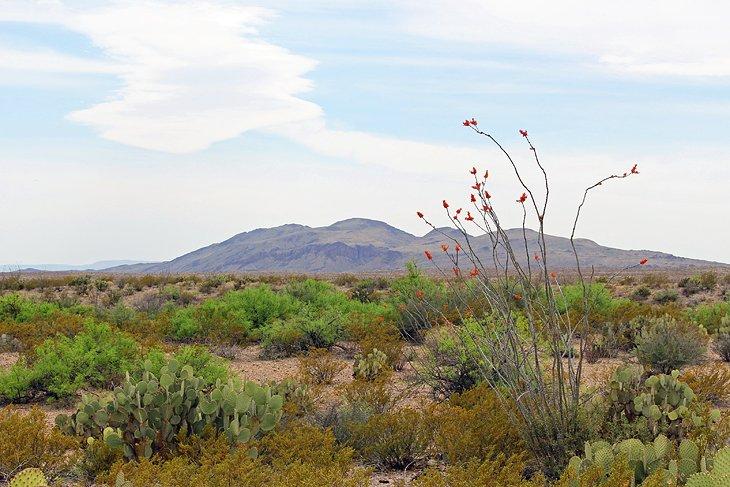 Sendero natural del desierto de Chihuahua
