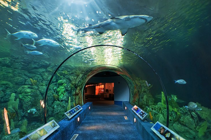 10 Top Rated Tourist Attractions In Galveston Planetware