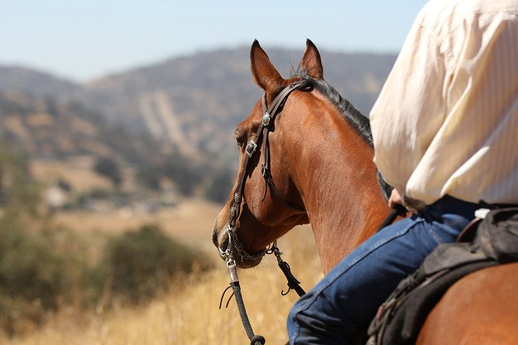 Take a Guided Equestrian Trail Ride