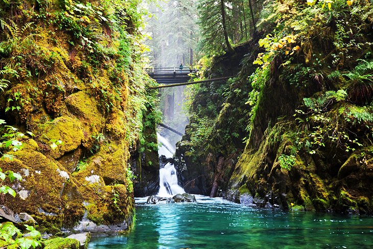 Exploring Olympic National Park And The Hoh Rain Forest A