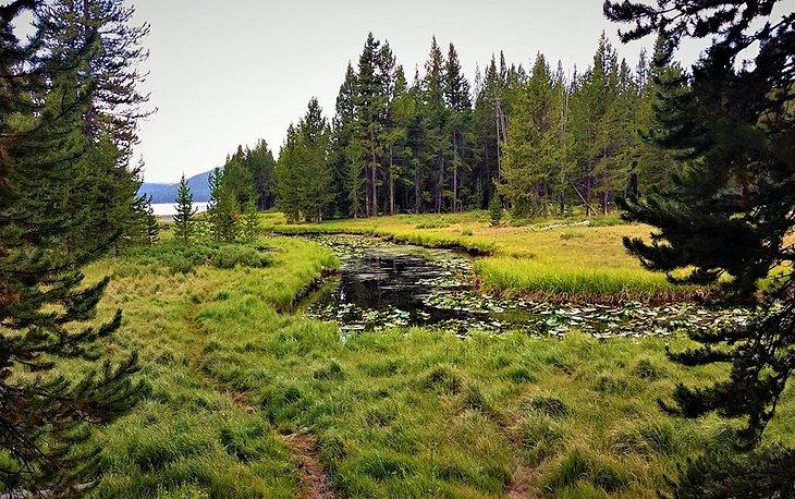 Sendero DeLacy Creek