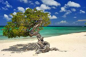 10 Best Beaches in Aruba