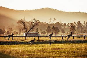 Exploring the Top Attractions of the Hunter Valley, Australia