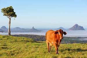 10 Top-Rated Things to Do in Maleny