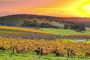 Top-Rated Tourist Attractions in the Barossa Valley
