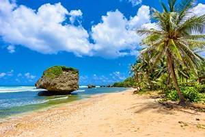 Best Time to Visit Barbados