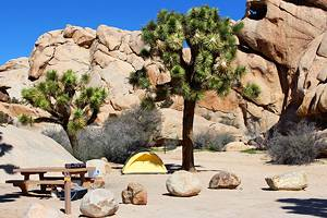 9 Best Campgrounds in Joshua Tree National Park & Camping Details