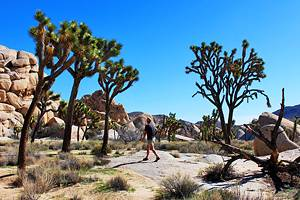 9 Fun Things to Do in Joshua Tree National Park: Hikes, Sights, & Activities