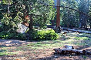 9 Best Campgrounds at Kings Canyon National Park