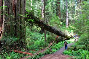 7 Best Hikes in Redwood National and State Parks