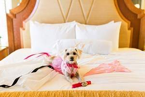 15 Pet-Friendly Hotels in San Diego, CA