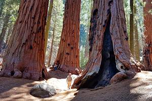 6 Best Campgrounds in Sequoia National Park