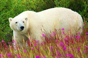 Exploring Hudson Bay: A Visitor's Guide