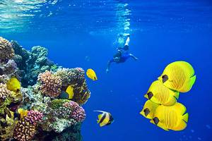 12 Top-Rated Tourist Attractions in the Red Sea Region