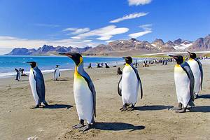 10 Top-Rated Tourist Attractions in the Falkland Islands