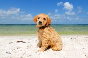 13 Dog-Friendly Beaches in Florida