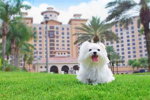 12 Best Pet-Friendly Hotels in Orlando, FL