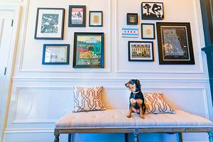 15 Pet-Friendly Hotels in Chicago, IL