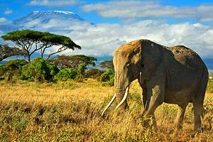 12 Top-Rated Tourist Attractions in Kenya