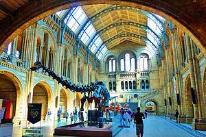 8 Things to See and Do at London's Natural History Museum