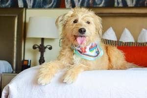 16 Pet-Friendly Hotels in New Orleans, LA
