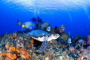 10 Best Tours & Excursions from Cozumel