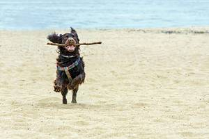 11 Best Dog-Friendly Beaches in New Jersey