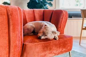 11 Best Pet-Friendly Hotels in Wilmington, NC
