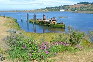 11 Top-Rated Things to Do in Gold Beach, OR