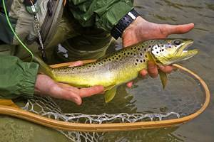 9 Top-Rated Fly Fishing Regions in Pennsylvania