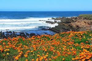 14 Top-Rated Day Trips from San Luis Obispo