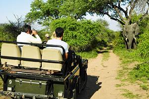 Exploring Kruger National Park: A Visitor's Guide
