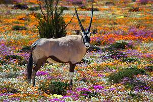 10 Top-Rated Tourist Attractions in the Northern Cape