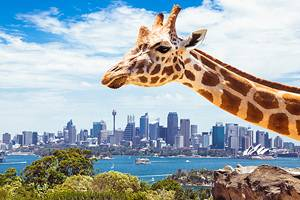 Sydney with Kids: 11 Top Things to Do