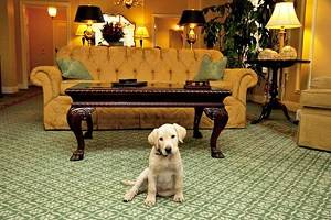 12 Best Pet-Friendly Hotels in Nashville, TN