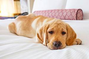 14 Best Pet-Friendly Hotels in Washington, D.C.