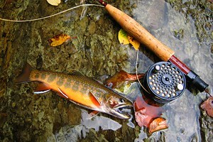 10 Top-Rated Rivers & Lakes for Trout Fishing in West Virginia