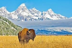 Wyoming in Pictures: 20 Beautiful Places to Photograph