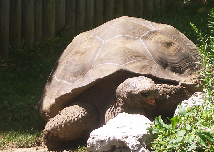 Tortoise at the Miller Park Zoo